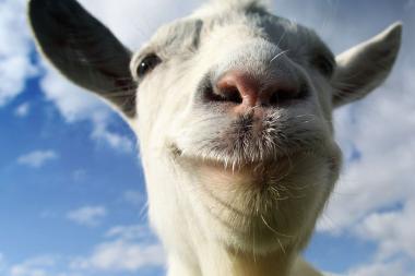 Goat Simulator מגיע ל-PS3 ול-PS4 באוגוסט